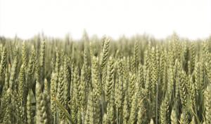 Nawożenie gleb w Polsce – nie jest małe, jest mało racjonalne