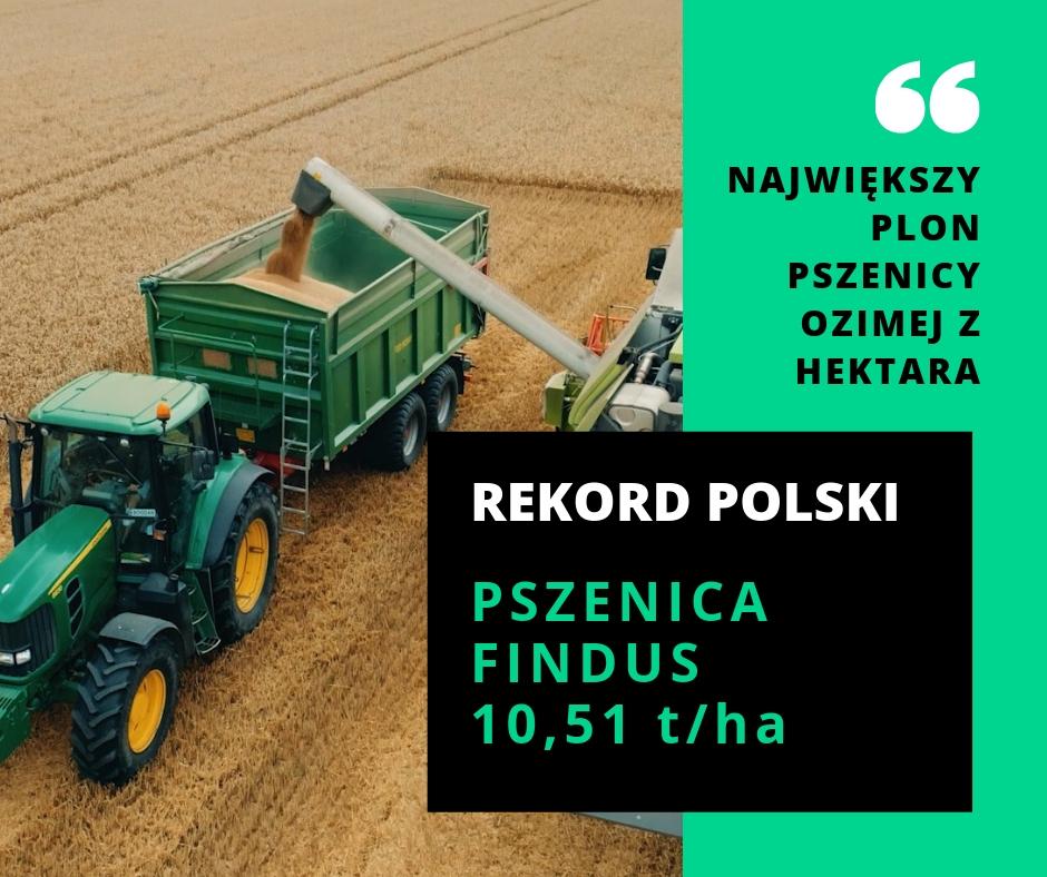 Rekord Polski na największy plon pszenicy ozimej z hektara