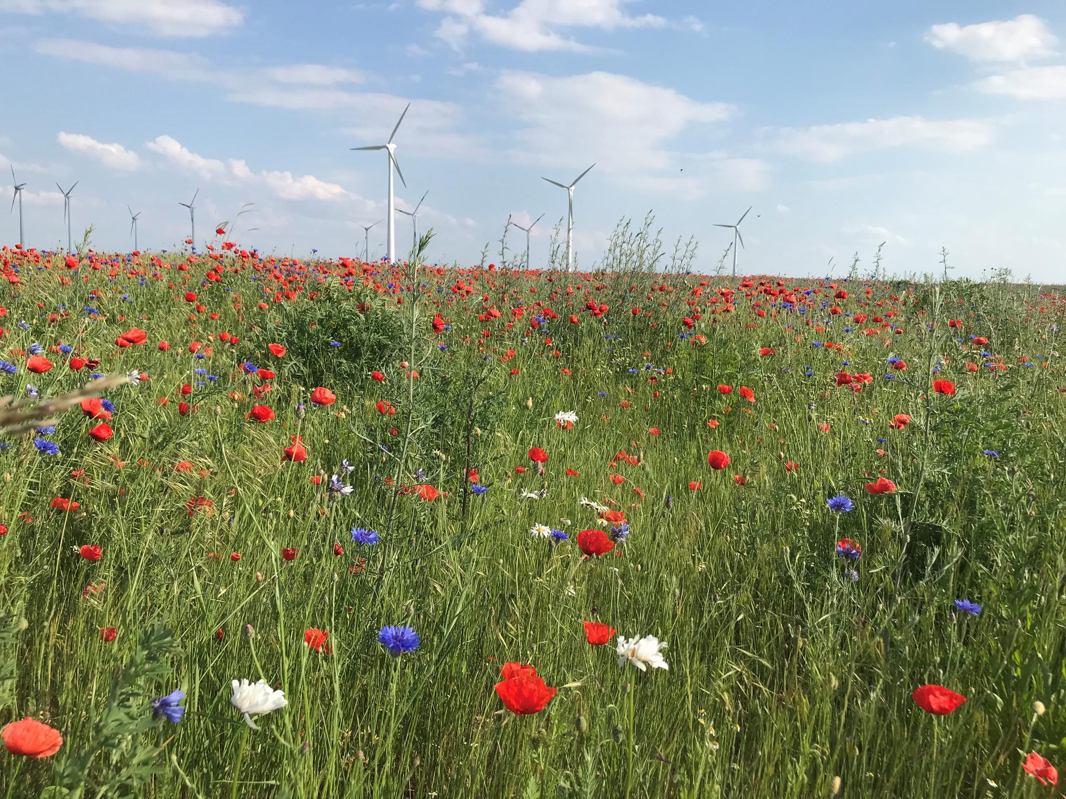 Bayer uruchamia program dekarbonizacji rolnictwa